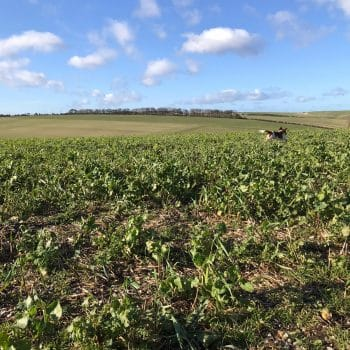 Cover crops on trial acres at the Spirit of Yorkshire Farm