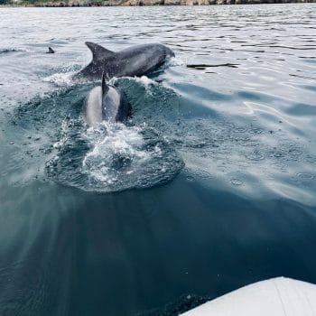 Dolphins spotted off the North Yorkshire Coast